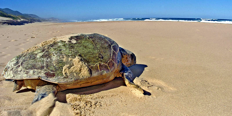 Observation des tortues